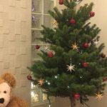 クリスマスツリーには本物のもみの木を。